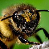 """tier-im-fokus.ch » """"Die Bienenhaltung muss dezentralisiert, nicht ...   Bienen   Scoop.it"""