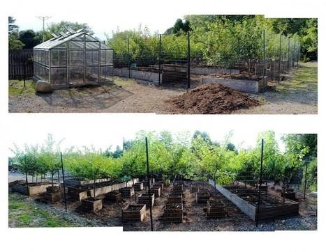 Amazingly Unique Tree Produces 40 Different Types of Fruit | Le It e Amo ✪ | Scoop.it