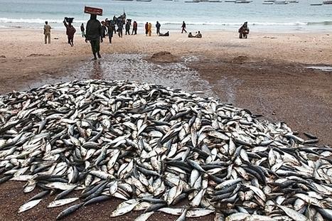 Expert warns on dangers of over-fishing in West Africa| glObserver Global Economics | Focus on ECOWAS | Scoop.it