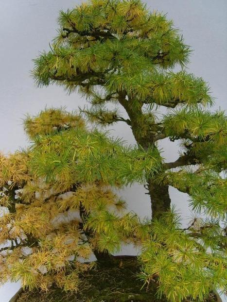 Life is amazing... • The Japanese garden and National Bonsai collection... | Zen Gardens | Scoop.it