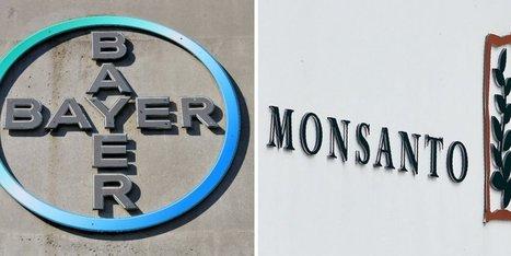 Bayer rachète Monsanto, le géant des semences OGM | Agriculture en Pyrénées-Atlantiques | Scoop.it