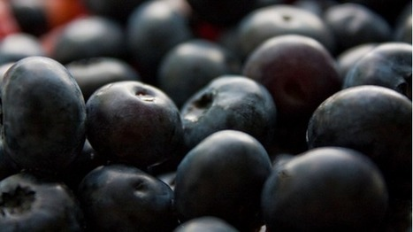 Study shows blueberry anti-oxidant prevents UV damage | nutrition | Scoop.it