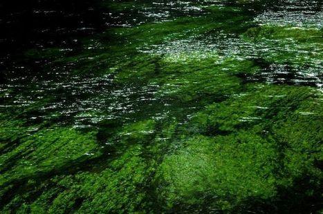Blog: Why Biodiversity Matters - Malibu Times (blog) | Amocean OceanScoops | Scoop.it