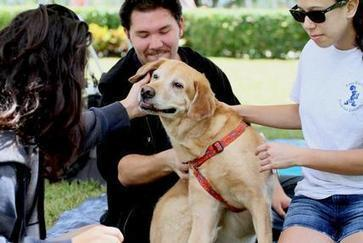 Therapy dogs help college students cope with anxiety - Palm Beach Post | Pet News | Scoop.it