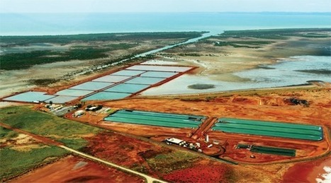 Australia Defines Best Algae Cultivation Locations :Algae Industry Magazine | Sustain Our Earth | Scoop.it