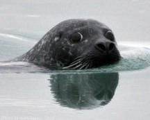 Animal Welfare at the WTO: EC-Seal Products - Animal Legal Defense Fund   Animal Welfare Law   Scoop.it