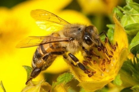 """Researchers Discover How Bees Naturally """"Vaccinate"""" Their Young 