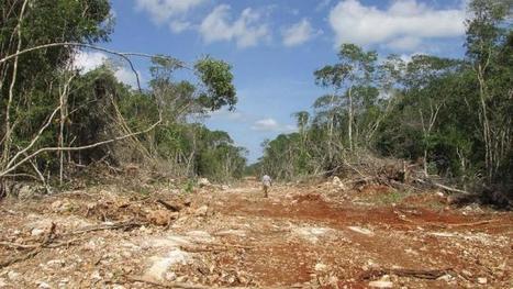 Pérdida de bosques por agroindustria - Yucatán a la mano   Agua   Scoop.it