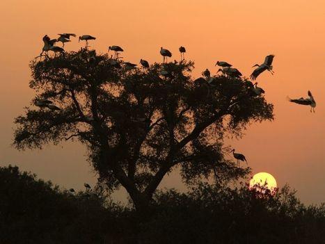 ESPAGNE. Parc Doñana : le sanctuaire de millions d'animaux est menacé | Chronique d'un pays où il ne se passe rien... ou presque ! | Scoop.it