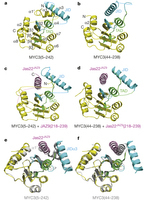 Structural basis of JAZ repression of MYC transcription factors in jasmonate signalling | Emerging Research in Plant Cell Biology | Scoop.it