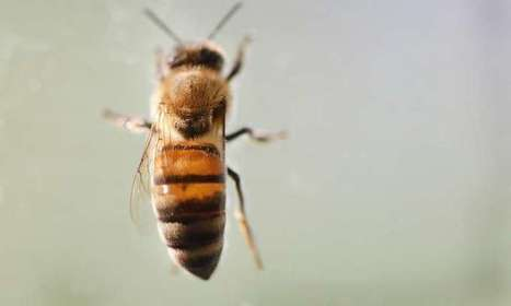 Rising CO2 levels reduce protein in crucial pollen source for bees   Help Save Our Beautiful Bees and Wildlife.Together we can make a difference.   Scoop.it