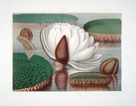 CHROMO-MANIA! The Art of Chromolithography in Boston, 1840-1910   Boston Athenæum   Art You Need   Scoop.it