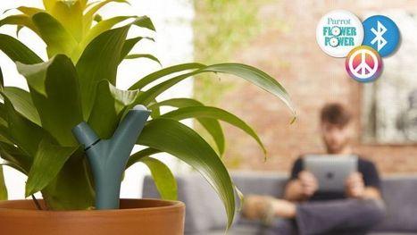 Le français Parrot connecte les plantes vertes - Le Figaro   innovation jardin   Scoop.it