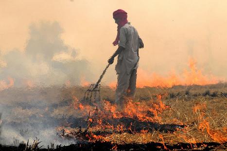 Punjab burning | AnnBot | Scoop.it