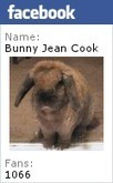 Bunny's Blog: June is Adopt-a-Shelter-Cat Month | Pet News | Scoop.it