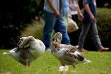 New Zealand: Poachers kill park wildlife   Wildlife Trafficking: Who Does it? Allows it?   Scoop.it