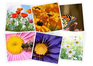 Crea collages de fotos online | TiQuiTac | Scoop.it