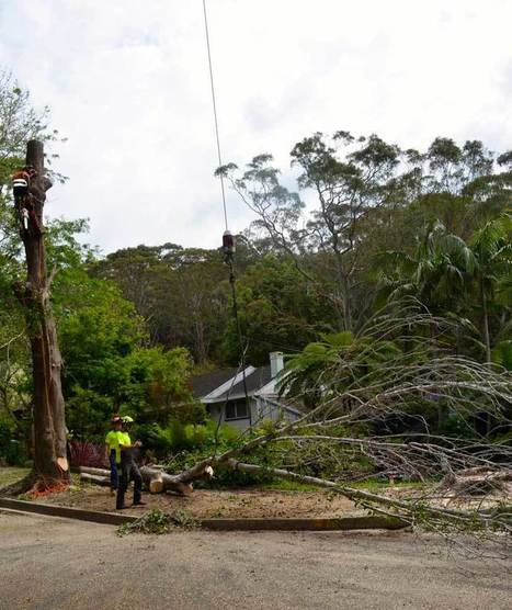Tree Removal and Cutting Services Sydney | Priority Tree Services | Skiing is great for increasing height | Scoop.it