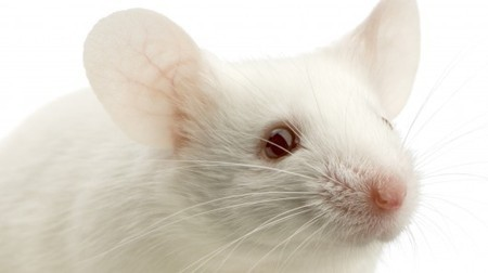 Researchers restore vision to mice by unlocking retina's neural code | Longevity science | Scoop.it