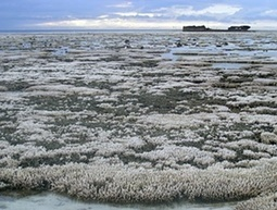 Climate change will lead to deformed and virus-hit coral reefs | Coral reef ecosystems resilience | Scoop.it
