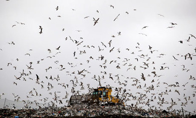 Ban food waste from landfill for renewable energy, urges thinktank - Energy-Broker.co.uk | The Biofuels Buzz | Scoop.it