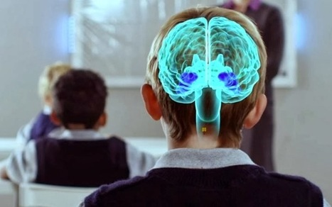 Alerta con la neuroeducación | paprofes | Scoop.it