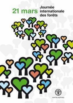 21 mars - La Journée internationale des forêts   GreenScoop   Scoop.it