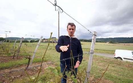 Après la grêle, retour dans les vignobles sinistrés du Madiran | Agriculture en Pyrénées-Atlantiques | Scoop.it