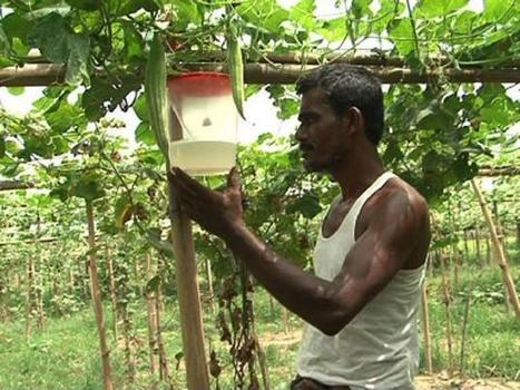 Tangail villages set laudable example of organic farming | Farming, Forests, Water, Fishing and Environment | Scoop.it