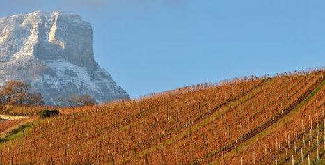 Sur la route des vignobles de Savoie | Le vin quotidien | Scoop.it