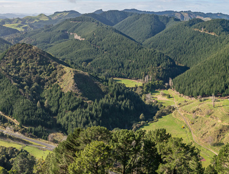 North Island mega-block forests sale | Timberland Investment | Scoop.it