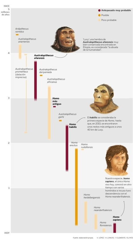 Enredos en la familia. La evolución humana no es una simple cadena lineal de eslabones perdidos | Enseñar Geografía e Historia en Secundaria | Scoop.it