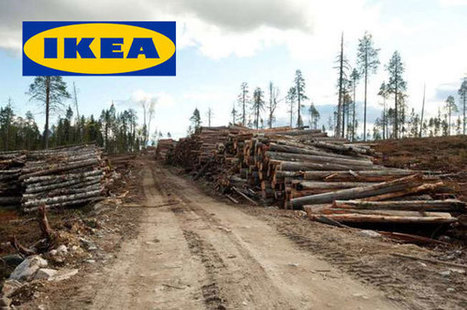 IKEA and Apple Raise the Sustainability Bar by Buying Their Own Forests   Energy & Sustainability   Scoop.it