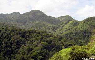 Recovery of Atlantic Forest depends on land-use histories | The Glory of the Garden | Scoop.it