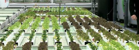 L'aquaponie révolutionne l'agriculture des villes de demain | HORTICULTURE BOTANIQUE | Scoop.it
