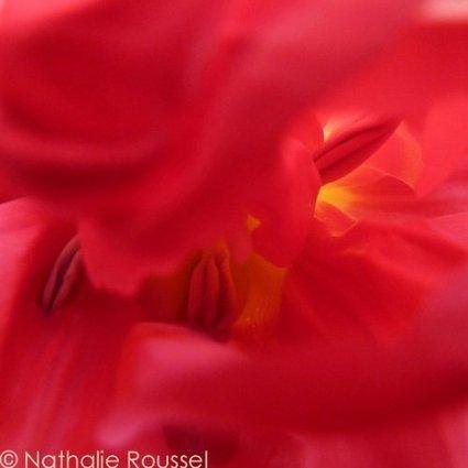 Nathalie Roussel - les fleurs en plein coeur | sources nourrissantes et vivifiantes | Scoop.it