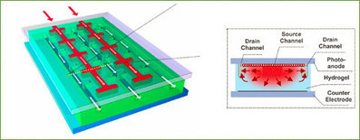 Biomimetic Vascular Solar Cells   Biomimicry   Scoop.it
