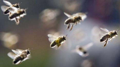EU to ban three harmful bee pesticides from December | Daily Crew | Scoop.it