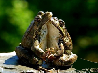 Life cycle of a frog | Gardening Life | Scoop.it
