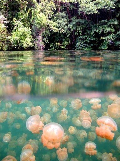 11 Unbelievable Bodies Of Water | DiverSync | Scoop.it