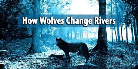 How Wolves Change Rivers | Science Reading for ELA | Scoop.it