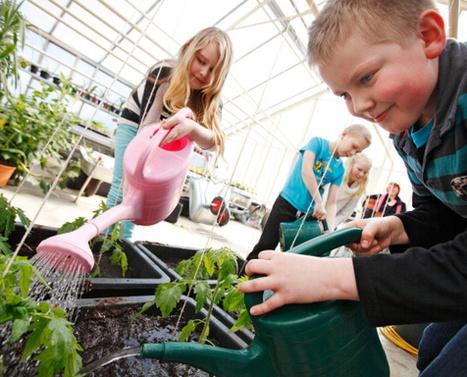 Tomaatintaimet opettavat vastuuta | Erityistä oppimista | Scoop.it