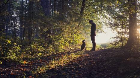 Six Things My Dog Taught Me about Leadership | The Perfect Storm Team | Scoop.it