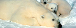 Protect America's Arctic from Shell's latest plans for drill ...   The Arctic   Scoop.it