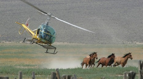 Newsela | U.S. agency gallops ahead with big roundups of wild horses in West | DanyelleD 3 | Scoop.it