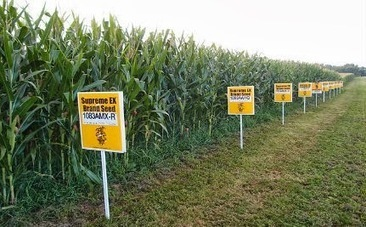 Mexico Bans GMO Corn, Effective Immediately.....The Vatic Project | GMOs | Scoop.it