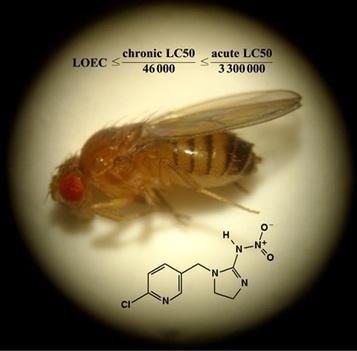 Des mouches au secours des abeilles-CNRS - Institut de chimie | Abeilles, intoxications et informations | Scoop.it