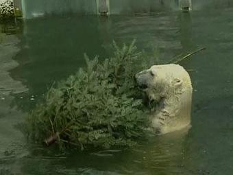 Zoo animals dine on used Christmas trees | Christmas Trees and More | Scoop.it