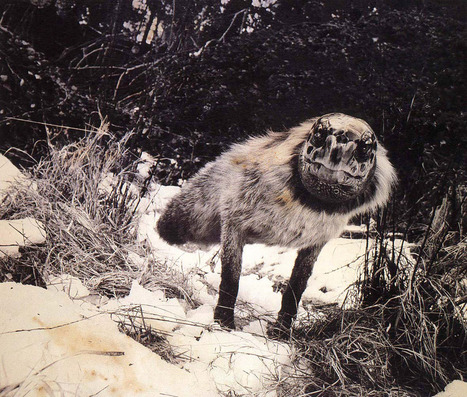 #319 ❘ Fauna ❘ 1985-1989 ❘ Joan Fontcuberta | # HISTOIRE DES ARTS - UN JOUR, UNE OEUVRE - 2013 | Scoop.it