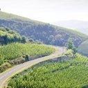 Les vins de la vallée du Rhône | oenologie en pays viennois | Scoop.it
